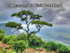 Reasons Why Palakkad Should Be On Your Travel List