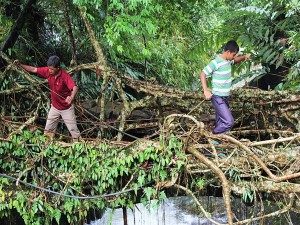 Interesting Facts About Living Root Bridges In Meghalaya