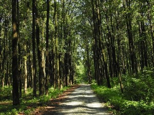 Buxa Tiger Reserve In West Bengal Attractions And How To Reach