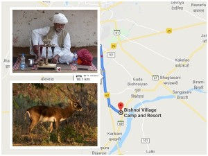 Bishnoi In Rajasthan History Specialities And How To Reach