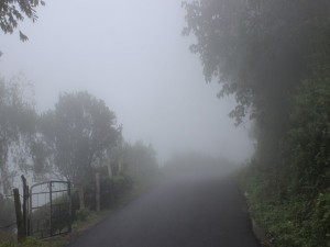 Top Monsoon Destinations In Kasaragod