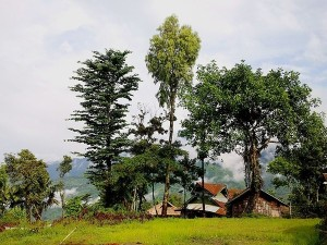 Longwa Village In Nagaland History Specialities And How To Reach