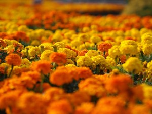 Places Where Onam Flowers Bloom