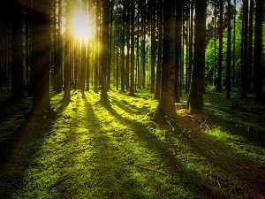 Mawphlang Sacred Forest In Meghalaya Attractions And How To