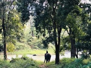 Nilambur To Bavani Via Bandipur Mysure Banglore And Mettur