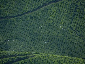 Best And Coolest Places To Visit In Kerala During Summer