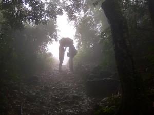 Kannur Paithalmala And Palakkayam Thattu Tourist Attractions In Monsoon Season