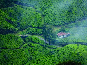 Munnar Open For Tourists And Tourism