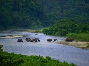 Dooras And Taki Best Places To Visit In West Bengal