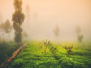 Koppa In Chikmagalur Karnataka Attractions And Specialities
