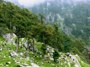 Interesting And Unknown Facts About Mcleod Ganj In Himachal Pradesh