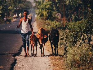 Yelegaon Gawali Village Of Milkmen In Maharashtra History Attractions And Specialities