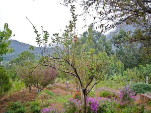 Kanthalloor In Idukki The Fruit Bowl Of Kerala Attractions And Specialities