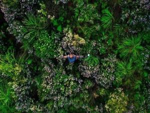 Tourists Are Thrilled Neelakurinji Blooms Again In Rajamala Munnar