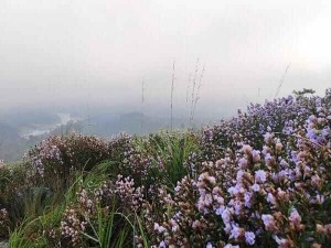 Travellers Are Banned From Visiting Neelakurinji In Idukki