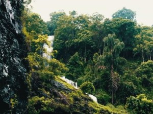 Paloor Kotta Waterfalls In Malappuram Attractions And Specialities