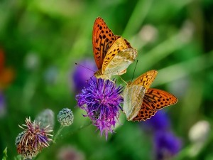 Butterfly Festival In Bangalore Starts Virtually From November 7th Attractions And Specialties