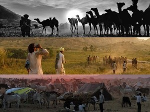 Pushkar Fair Interesting Facts About The Largest Camels In The World