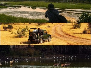 Ranthambore National Park In Rajasthan History Attractions Specialties And How To Reach