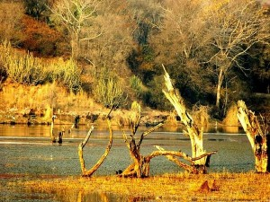 Best Wildlife Sanctuaries In Rajasthan For An Incredible Wildlife Experience
