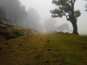 Forest Department To Ban Entry To Palkulammedu Tourism Center Idukki