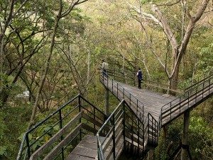 From Coorg To Thenmala Top Eco Tourism Destinations In India