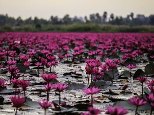 Gulawat Lotus Valley In Indore Madhya Pradesh Attractions Specialties And How To Reach