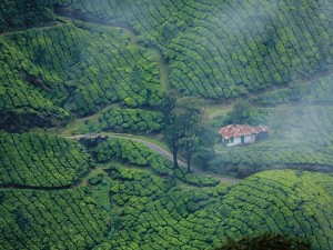 From Greenary To Sightseeing Reasons To Visit Munnar In April
