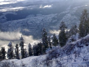 From Summer Hills To Mall Road Best Places To Visit In Picture Perfect Hill Station Shimla