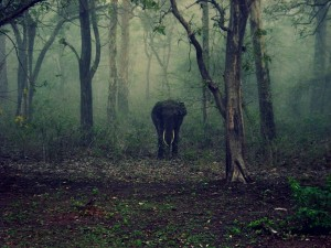 Covid 19 India Closes All Tiger Reserves National Park And Sanctuaries Till Further Notice