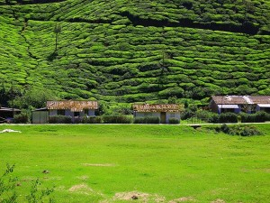 From Travel Permission To Opening Dates Latest Travel Updates In Munnar