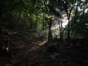 Aokigahara The Suicide Forest In Japan Interesting And Unknown Facts