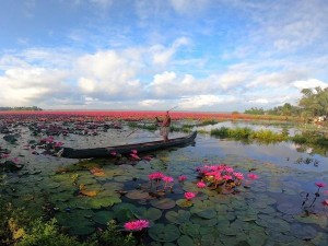 Kottayam Malarikkal Water Lily Festival Stopped Due To Covid