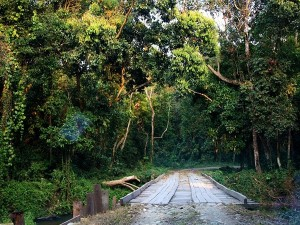 Dooars Gateway To Northeast India And Bhutan Attractions And Specialities