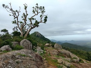 Biligiriranga Hills In Karnataka Attractions Specialities Things To Do And How To Reach