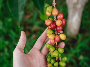 International Coffee Day From Wayanad To Chikmagalur Well Known Coffee Destinations In India