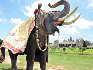 Navaratri 2021 Mysuru Dasara Restrictions And Guidelines
