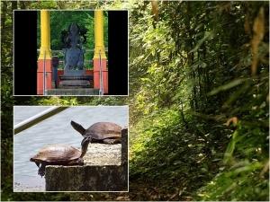 ആമകൾക്ക് അന്നനിവേദ്യം നടത്തുന്ന  അപൂർവ്വ ക്ഷേത്രം
