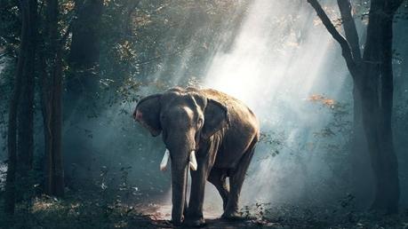 കബിനി വന്യജീവി സങ്കേതത്തിന്റെ മായ കാഴ്ചകളിലേക്ക്