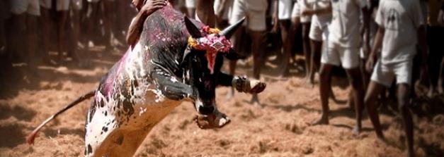ആളെ കൊല്ലുന്ന ജെല്ലിക്കെട്ട് മുതൽ തൂങ്കാ നഗരം വരെ..മധുരൈയിലെ അവിശ്വസനീയമായ കാര്യങ്ങള്