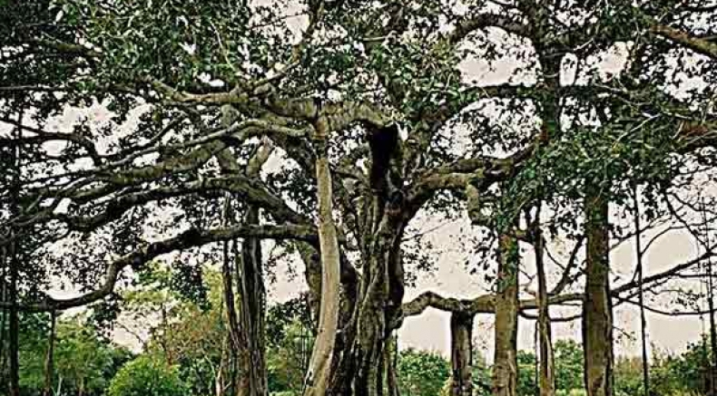 ഇന്ത്യയിലെ ആൽമരചുവട്ടിലേക്ക് ഒരു യാത്ര