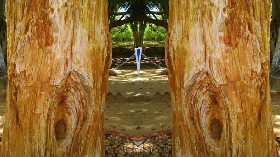 കല്ലായി മാറിയ വിചിത്ര മരങ്ങളുള്ള പാർക്ക്
